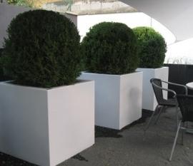 Polyester plantenbak 800x800x800