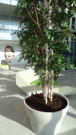 Polymeerbeton plantenpot Ø 1000x600