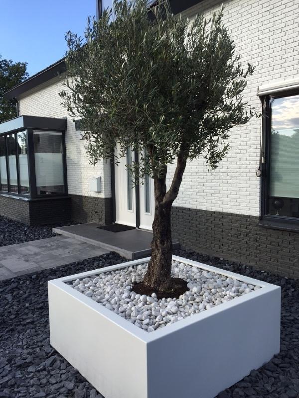 Polyester plantenbak 1200x1200x800