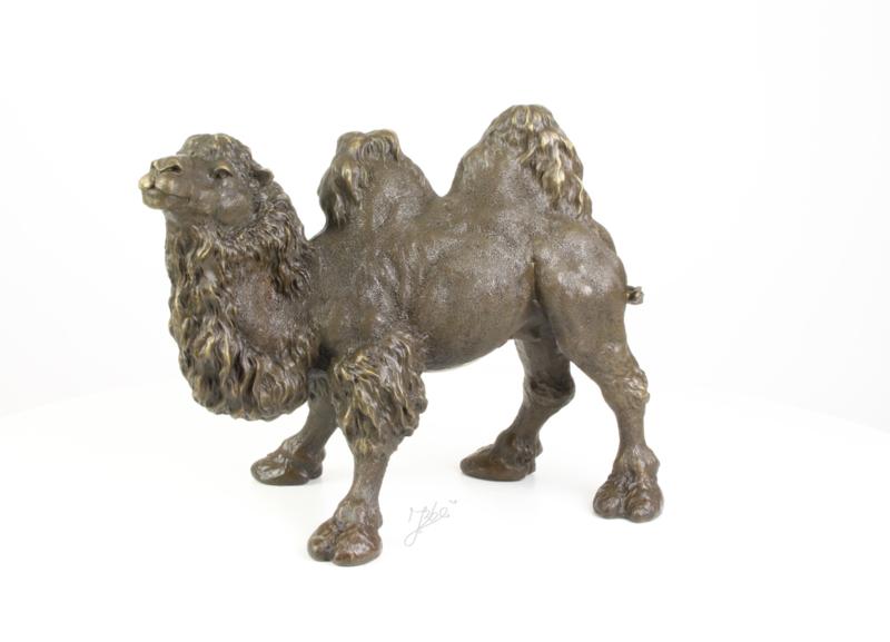 Gedetailleerd beeld van een kameel
