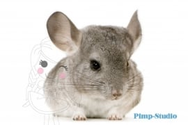 Strijkapplicatie Chinchilla
