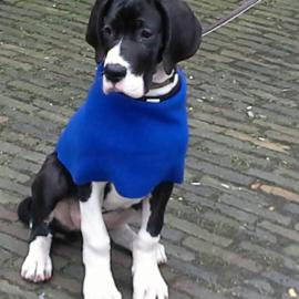 Hondensjaal van dubbelzijdig fleece