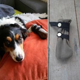 Voet geopereerd? Katoenen schoenen voor de hond