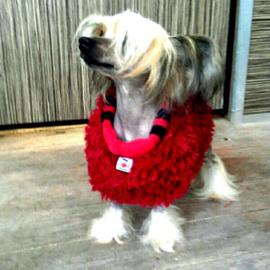 Hondensjaal fakefur/geruite fleece