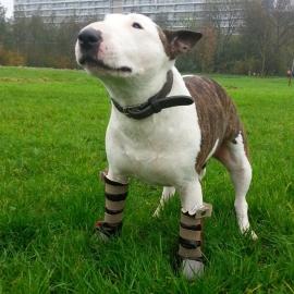Gevoelige poot? DogBoot | Buitenlaarsje voor de hond