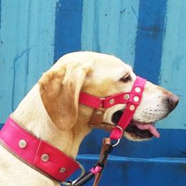 Gentle leader van leer/suede op maat in de kleur van je hond