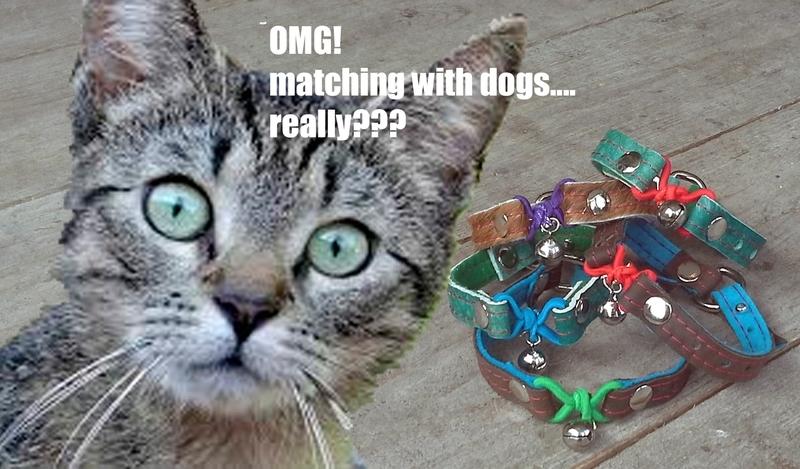 Kattenbandje