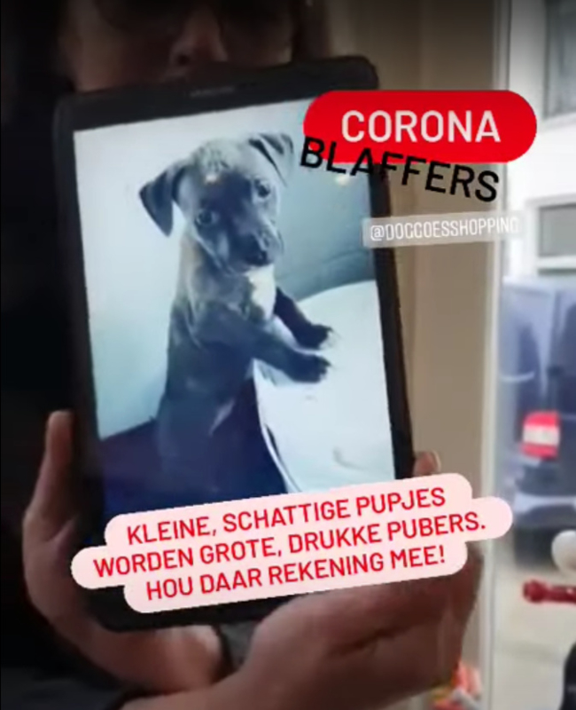 Corona Blaffers Vlogs
