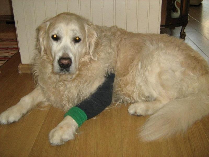 Poot gewond en kap een drama? Mitella voor de hond!