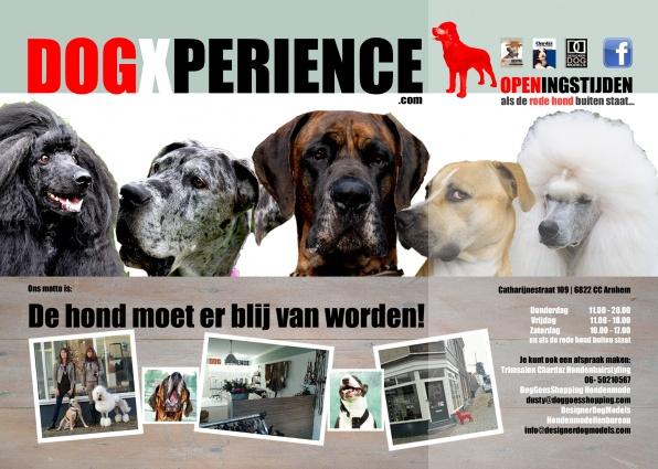 DogXperience