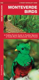 Vögel Costa Rica Monteverde