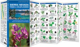 Sierra Nevada - Bomen en Bloemen