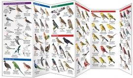 Hawaii - Vogels