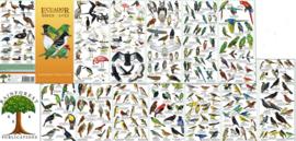 Ecuador vogels