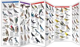 Oregon - Vogels