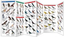 Alberta - Vogels