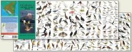 Nicaragua - Vögel