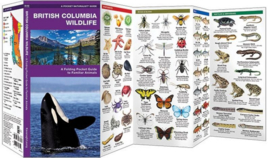 British Columbia Wildlife