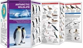 Antarctica - Dieren