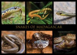 Snakes of Madagascar