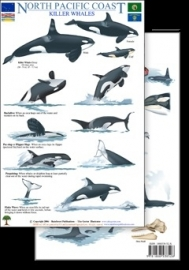 North Pacific Coast - Killer Whales