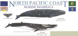 Noord-Atlantische Kust - Walvissen en dolfijnen