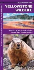 Yellowstone - Dieren