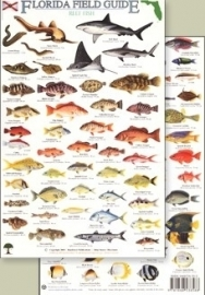 Florida Field Guide - Reef fish