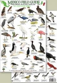México - Aves de mar y costa
