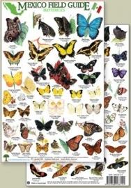 Mexico - Butterflies