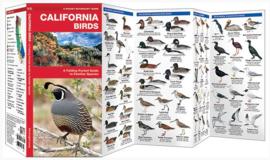 Californië - Vogels