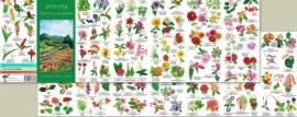 Panama - Tropische bloemen