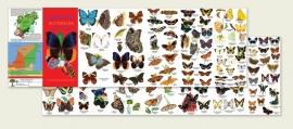 Mexico vlinders