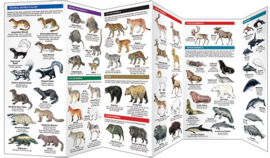 Noord-Amerika - Zoogdieren