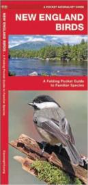 New England Birds guide