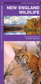 New England Wildlife Guide