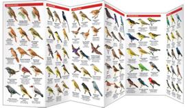 Costa Rica - Vogels Monteverde