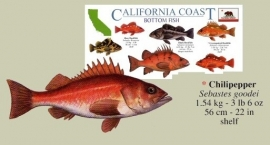California - Bottom fish