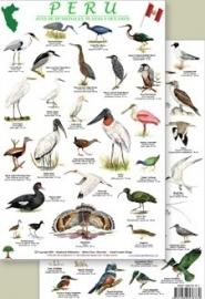 Peru - Kustvogels en wetlandvogels