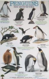 Naturführer Pinguine der Welt