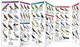 India - Aves de India