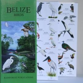 Belice - Aves