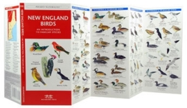 New England - Vogels