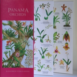 Panama - Orquídeas