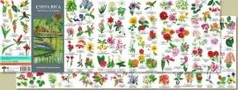 Guide des fleurs du Costa Rica