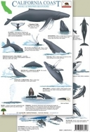 California - Whale and dolphin behaviors