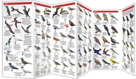 Galápagos - Guía de fauna