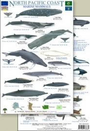 North Pacific Coast - Marine Mammals