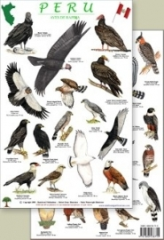 Peru - Raptors bird guide