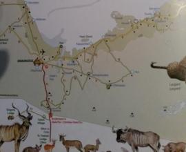 Guide des animaux d'Etosha